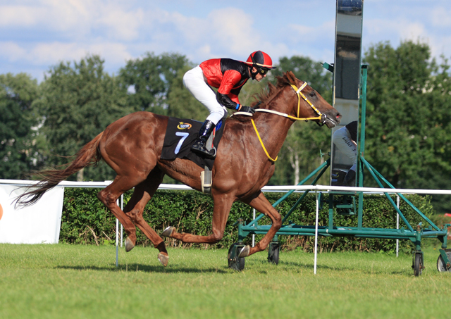 Intens - koń roku 2011, właściciel Roman Piwko