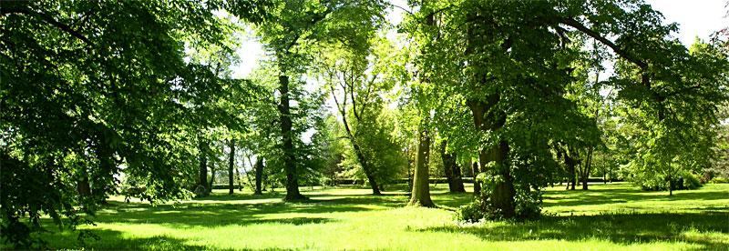 zespół pałacowo - parkowy w Łosiowie