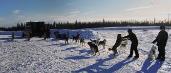12 Fairbanks, Alaska, aut. W.Kisieliński