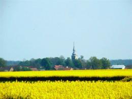 Pola uprawne w okolicach wsi Różyna