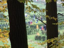 Galeria Kolejny rajd  lewińskiej podstawówki - Racibórz