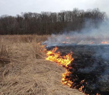 wypalanie traw1.jpeg
