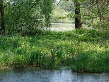 Zespół przyrodniczo krajobrazowy Lewin Brzeski