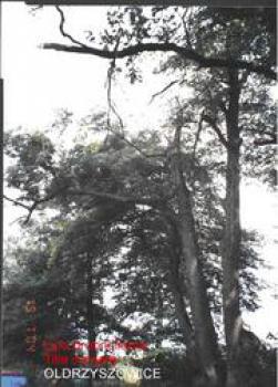 Lipa drobnolistna Nr 38 - Oldrzyszowice