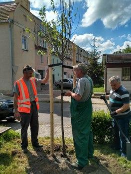 Galeria Sadzenie drzew