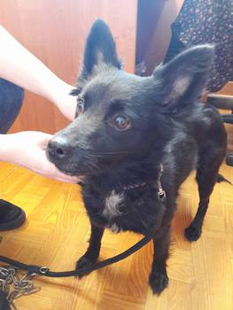 Galeria pies szuka wlasciciela