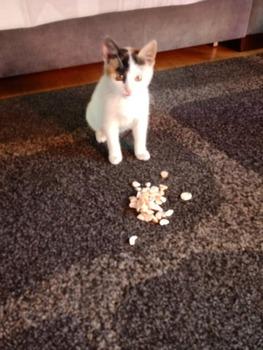 Galeria Kot do adopcji