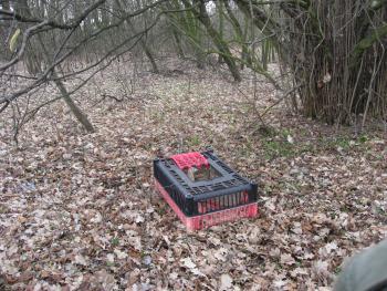 Wypuszczanie bażantów na teren gminy Lewin Brzeski