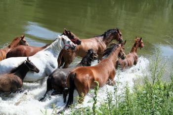 konie w Nysie Kłodzkiej